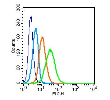 CD31 Polyclonal Antibody