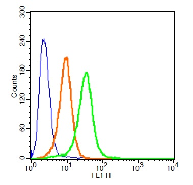 CD34 Polyclonal Antibody, FITC Conjugated