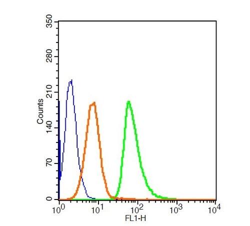Caspase 3 Polyclonal Antibody, FITC Conjugated