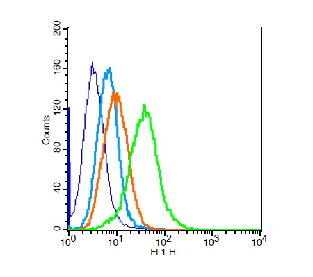 H9C2 cells probed with Rabbit Anti-PI3 kinase p85 alpha subunit Polyclonal Antibody (bs-0128R) at 1:100 for 30 minutes followed by incubation with Goat Anti-Rabbit IgG FITC conjugated secondary at 1:100 (green) for 30 minutes compared to control cells (blue), secondary only (light blue) and isotype control (orange)
