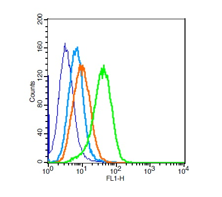 cells probed with Rabbit Anti-Calponin 2 + 3 Polyclonal Antibody (bs-4902R) at 1:100 for 30 minutes followed by incubation with Goat Anti-Rabbit IgG FITC conjugated secondary at 1:100 for 30 minutes (green)  compared to control cells (blue), secondary only (light blue) and isotype control (orange)
