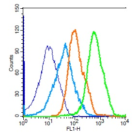 Mouse splenocytes probed with Rabbit Anti-SIRT7 Polyclonal Antibody, Unconjugated (bs-5973R) (green) at 1:50 for 30 minutes followed by a FITC conjugated secondary antibody compared to unstained cells (blue), secondary only(light blue), and isotype control(orange).
