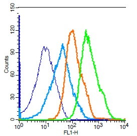 Mouse splenocytes probed with Rabbit Anti-Cdc25C Polyclonal Antibody, Unconjugated (bs-9597R) (green) at 1:50 for 30 minutes followed by a FITC conjugated secondary antibody compared to unstained cells (blue), secondary only(light blue), and isotype control(orange).