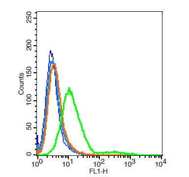 Rat H9C2 cells probed with Rabbit Anti-GALR2 Polyclonal Antibody, Unconjugated (bs-11527R)  at 6ug for 30 minutes followed by incubation with a conjugated secondary (bs-0295G-FITC)  (green) for 30 minutes compared to control cells (blue), secondary only (light blue) and isotype control (orange).