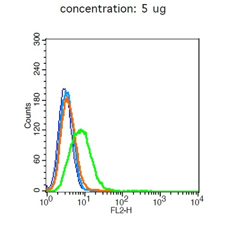 A549 cells probed with CD10 Polyclonal Antibody, Unconjugated (bs-0527R)  at 1:20 for 30 minutes followed by incubation with a conjugated secondary (bs-0295G-PE)  (green) for 30 minutes compared to control cells (blue), secondary only (light blue) and isotype control (orange).