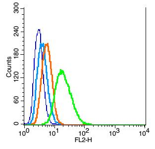 RSC96 probed with LAMP-1 Polyclonal Antibody, Unconjugated (bs-1970R)  at 1:100 for 30 minutes followed by incubation with a conjugated secondary (PE Conjugated)  (green) for 30 minutes compared to control cells (blue), secondary only (light blue) and isotype control (orange).