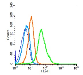 Human Raji cells probed with CD19 Polyclonal Antibody, Unconjugated (bs-0079R) (green) at 1:100 for 30 minutes followed by a PE conjugated secondary antibody compared to unstained cells (blue), secondary only (light blue), and isotype control (orange).