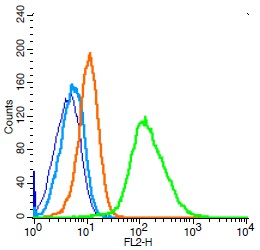 Human Raji cells probed with IL-6R beta Polyclonal Antibody, Unconjugated (bs-1459R) (green) at 1:100 for 30 minutes followed by a PE conjugated secondary antibody compared to unstained cells (blue), secondary only (light blue), and isotype control (orange).