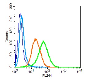 Human U937 cells probed with CD101 Polyclonal Antibody, Unconjugated (bs-10727R) (green) at 1:100 for 30 minutes followed by a PE conjugated secondary antibody compared to unstained cells (blue), secondary only (light blue), and isotype control (orange).
