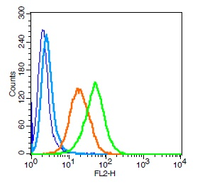 Human U937 cells probed with LAMP-1 Polyclonal Antibody, Unconjugated (bs-1970R) (green) at 1:100 for 30 minutes followed by a PE conjugated secondary antibody compared to unstained cells (blue), secondary only (light blue), and isotype control (orange).