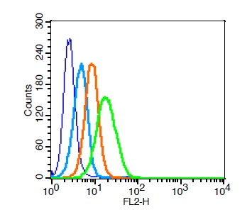 Human U937 cells probed withCXCR4 Polyclonal Antibody, Unconjugated (bs-1011R)  at 1:100 for 30 minutes followed by incubation with a PE conjugated secondary (green) for 30 minutes compared to control cells (blue), secondary only (light blue) and isotype control (orange).