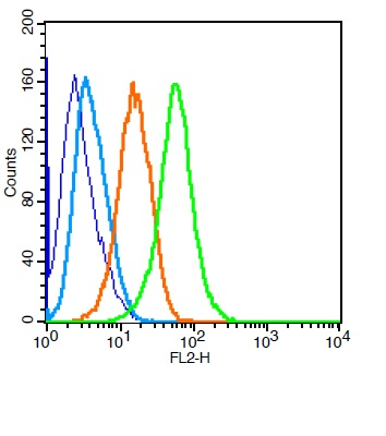 U87MG cells probed with Puma Polyclonal Antibody, Unconjugated (bs-1573R)  at 1:50 for 30 minutes followed by incubation with a conjugated secondary (PE Conjugated)  (green) for 30 minutes compared to control cells (blue), secondary only (light blue) and isotype control (orange).