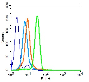 Human HL-60 cells probed with Integrin beta 3 Polyclonal Antibody, Unconjugated (bs-0342R) (green) at 1:100 for 30 minutes followed by a FITC conjugated secondary antibody compared to unstained cells (blue), secondary only (light blue), and isotype control (orange).