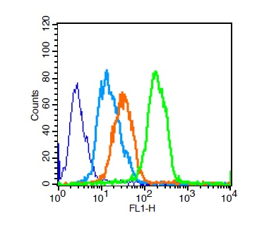 U251 cells probed with CD8 Polyclonal Antibody, Unconjugated (bs-4790R)  for 30 minutes followed by incubation with a conjugated secondary (FITC Conjugated)  (green) for 30 minutes compared to control cells (blue), secondary only (light blue) and isotype control (orange).