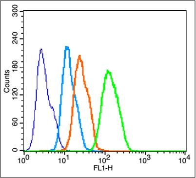 HepG2 cells probed with Cytochrome C Polyclonal  Antibody, unconjugated (bs-0013) at 1:100 dilution for 30 minutes compared to control cells (blue) and isotype control (orange).