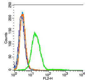 RSC96 cells probed with Neurokinin B receptor Antibody, unconjugated (bs-0166R) at 1:100 dilution for 30 minutes compared to control cells (blue) and isotype control (orange)