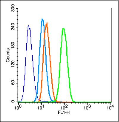 HeLa cells probed with MMP2 Polyclonal Antibody, unconjugated (bs-0412R) at 1:100 dilution for 30 minutes compared to control cells (blue) and isotype control (orange)