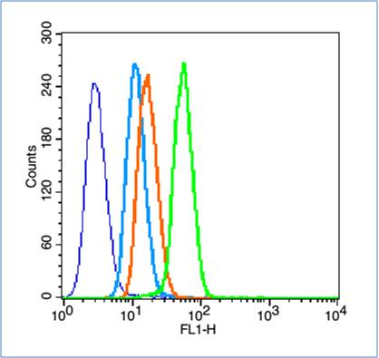 HeLa cells probed with HIF-1 Alpha Polyclonal Antibody, unconjugated (bs-0737R) at 1:100 dilution for 30 minutes compared to control cells (blue) and isotype control (orange)