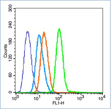 HL-60 cells probed with NFKB p65(Ser536) Polyclonal Antibody, unconjugated (bs-0982R) at 1:100 dilution for 30 minutes compared to control cells (blue) and isotype control (orange)