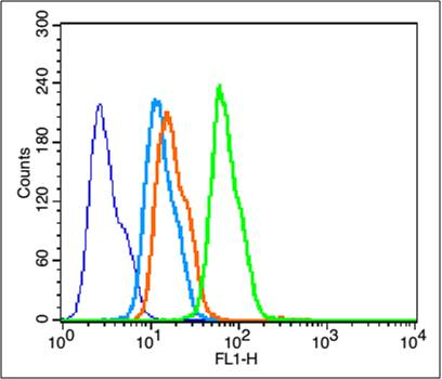 HepG2 cells were fixed with 4% PFA for 10min at room temperature, and incubated in 5% BSA blocking buffer for 30 min at room temperature. Cells were then stained with BDNF Polyclonal Antibody(bs-4989R) at 1:50 dilution in blocking buffer and incubated for 30 min at room temperature, washed twice with 2%BSA  in PBS, followed by secondary antibody incubation for 40 min at room temperature. Acquisitions of 20,000 events were performed.  Cells stained with primary antibody (green), no antibody control control (blue), secondary antibody only (light blue) and isotype control (orange).