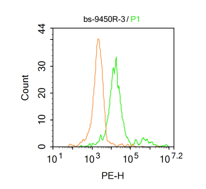 Raji Cells fixed with 4% paraformaldehyde; permeabilize with ice cold methanol; blocking with 1 X PBS containing 5% BSA; probed with  5 Methyl Cytosine Polyclonal Antibody, Unconjugated (bs- 9450R) (green) at 1:33 for 30 minutes followed by a PE conjugated secondary antibody compared to isotype control (orange).