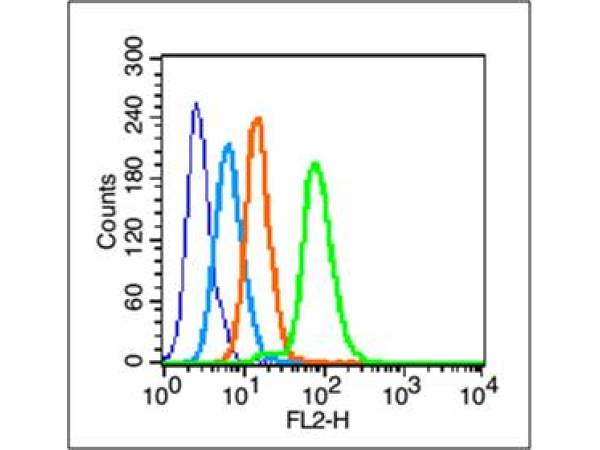 HepG2 cells probed with c-Jun Polyclonal Antibody, unconjugated (bs-0670R) at 1:100 dilution for 30 minutes compared to control cells (dark blue), secondary only (light blue) and isotype control (orange)