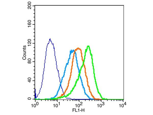 293T cells probed with Occludin Polyclonal Antibody, unconjugated (bs-1495R) at 1:100 dilution for 30 minutes compared to control cells (dark blue), secondary only (light blue) and isotype control (orange)
