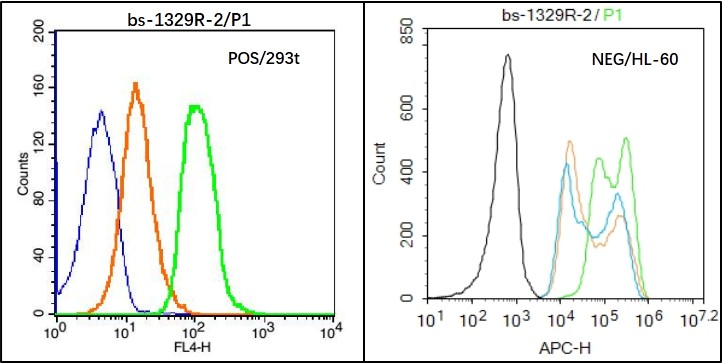 293T (Positive) and HL-60 (Negative control) cells (black) were fixed with 4% PFA for 10min at room temperature, permeabilized with  PBST  for 20 min at room temperature, and incubated in 5% BSA blocking buffer for 30 min at room temperature. Cells were then stained with ZO-1 Antibody( bs-1329R) at 1:50 dilution in blocking buffer and incubated for 30 min at room temperature, washed twice with 2% BSA in PBS, followed by secondary antibody(blue) incubation for 40 min at room temperature. Acquisitions of 20,000 events were performed. Cells stained with primary antibody (green), and isotype control (orange).
