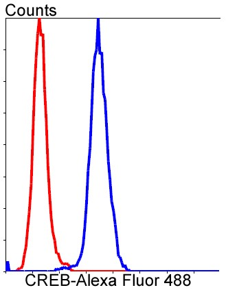 Flow cytometric analysis of HeLa cells with CREB (2B5 ) Monoclonal Antibody (bsm-52245R) at a 1:100 dilution (red) compared with an unlabeled control (cells without incubation with primary antibody; blue).