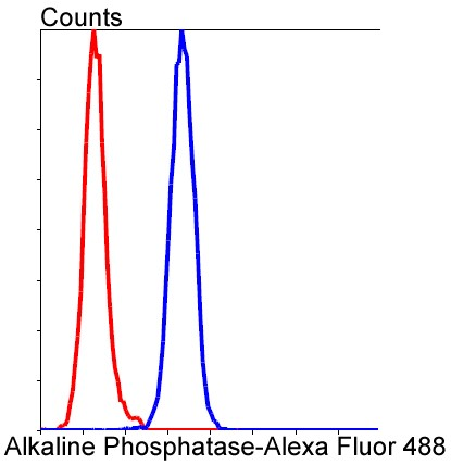 Flow cytometric analysis of HeLa cells with Alkaline Phosphatase (1G9 ) Monoclonal Antibody (bsm-52252R) at a 1:100 dilution (red) compared with an unlabeled control (cells without incubation with primary antibody; blue).