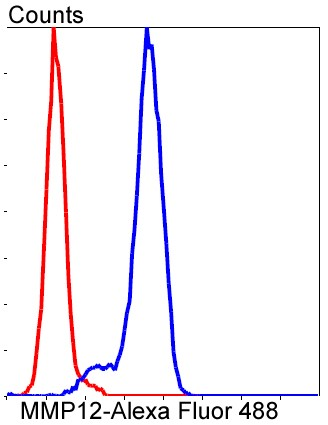 Flow cytometric analysis of A549 cells with MMP12 (1A4) Monoclonal Antibody (bsm-52292R) at a 1:50 dilution (red) compared with an unlabeled control (cells without incubation with primary antibody; blue).