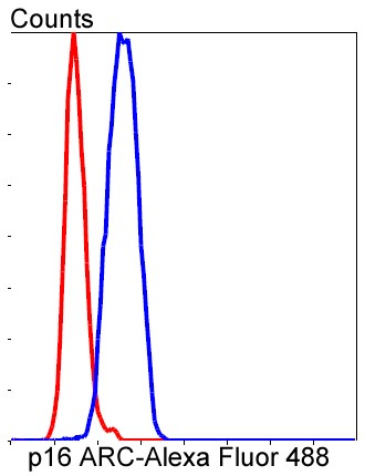 Flow cytometric analysis of SH-SY-5Y cells with p16 ARC (8D8) Monoclonal Antibody (bsm-52302R) at a 1:50 dilution (red) compared with an unlabeled control (cells without incubation with primary antibody; blue).