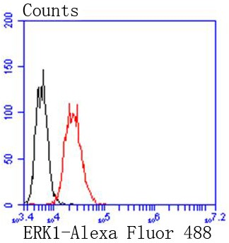 Flow cytometric analysis of Jurkat cells with ERK1 (6B4) Monoclonal Antibody (bsm-52329R) at 1:50 dilution (red) compared with an unlabeled control (cells without incubation with primary antibody; black).