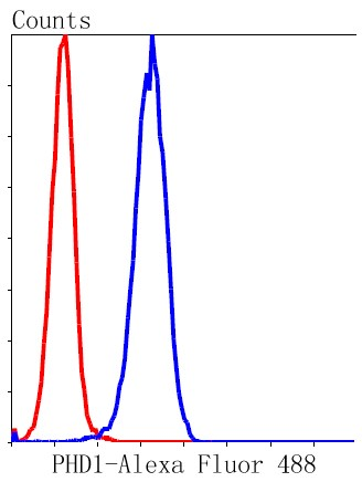 Flow cytometric analysis of Hela cells with PHD1/prolyl hydroxylase (7G8) Monoclonal Antibody (bsm-52336R) at 1:50 dilution (red) compared with an unlabeled control (cells without incubation with primary antibody; black).