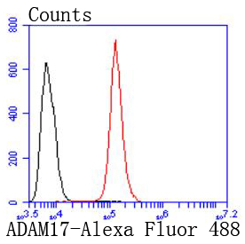 Flow cytometric analysis of Hela cells with ADAM17 (9E7) Monoclonal Antibody (bsm-52009R) at 1:50 dilution (red) compared with an unlabeled control (cells without incubation with primary antibody; black). Alexa Fluor 488-conjugated goat anti-rabbit IgG was used as the secondary antibody.