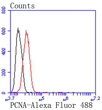 Flow cytometric analysis of HeLa lysate probed with \r\nPCNA (1G3) Monoclonal Antibody (bsm-52347R) at 1:50 dilution (red) compared with an unlabeled control (cells without incubation with primary antibody; black).