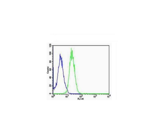 A549 cells probed with Rabbit Anti-ARC\/Arg3.1 Polyclonal Antibody (bs-0385R) at 1:100 for 60 minutes at room temperature followed by Goat Anti-Rabbit IgG (H+L) Alexa Fluor 488 Conjugated Secondary.\\n
