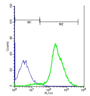 Mouse thymocytes probed with Rabbit Anti-TSHR Polyclonal Antibody, Unconjugated (bs-0460R) (green) at 1:100 for 60 minutes followed by a FITC conjugated secondary compared to control cells (blue).