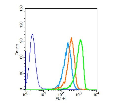 Human HepG2 cells probed with Rabbit Anti-DOK5 Polyclonal Antibody (bs-8587R) at 1:50 for 40 minutes followed by incubation with Goat Anti-Rabbit IgG FITC Conjugated secondary (bs-0295G-FITC) at 1:100 (green) for 40 minutes compared to control cells (blue), secondary only (light blue) and isotype control (orange)