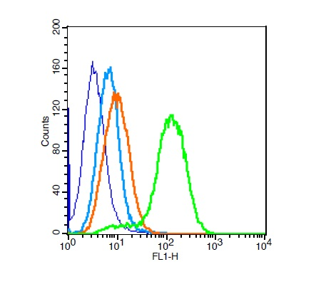 H9C2 cells probed with Rabbit Anti-Calponin 1 Polyclonal Antibody (bs-0095R) at 1:100 for 30 minutes followed by incubation with Goat Anti-Rabbit IgG FITC conjugated secondary at 1:100 (green) for 30 minutes compared to control cells (blue), secondary only (light blue) and isotype control (orange)
